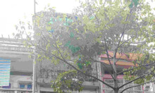 MT Bùi Thị Xuân, P Bến Thành đoạn đẹp DT 4x18m 4 tầng.