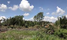 Đất nền tái định cư Tân Trụ ven sông Vàm Cỏ Đông, ngay cụm KCN lớn