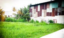 Đất thổ cư 95m2 ( 5,5x15,6) SHR, Huyện Bình Chánh.