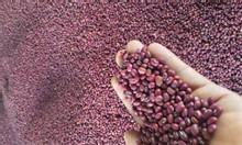 Cung cấp đậu đỏ số lượng lớn