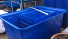 Thùng nhựa dung tích lớn tiện ích cho mô hình nuôi cá sạch ngày nay (ảnh 4)