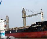 Cung cấp sơn Hải Âu 2 thành phần cho tàu biển giá rẻ