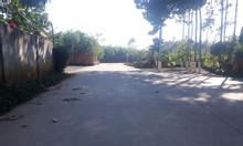 Tôi cần bán hơn 2.2 ha đất Long Phước, gần sân bay Long Thành.