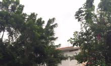 Cần cho thuê gấp biệt thự Mỹ Quang, Phú Mỹ Hưng 4PN 4WC nhà đẹp giá rẻ