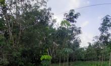 Đất Long Nguyên Bàu Bàng 225m2 giá 480tr