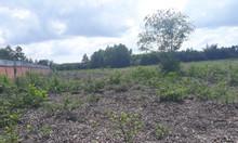 Bán gấp 1 sào đất gần cụm Công nghiệp Long Phước, đất màu hồng có thổ