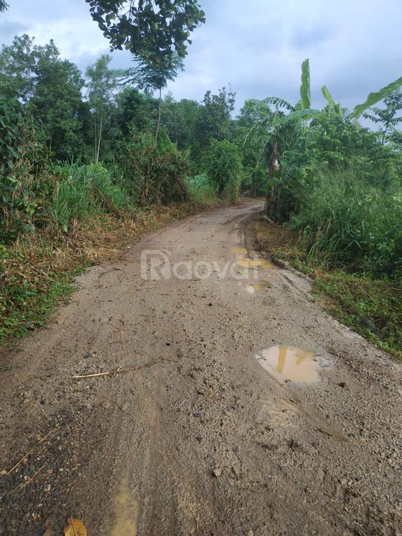 Cần bán 1 mẫu đất Bàu Cạn, Long Thành đường liên tỉnh chỉ 500 ngàn/m2.