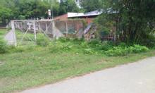 500m thổ vườn giá 970tr bao giấy phép xây dựng – Cây Trôm Mỹ Khánh