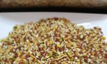 Chuyên sỉ lẻ ngũ cốc Kim Kê - thức ăn dành cho gà đá