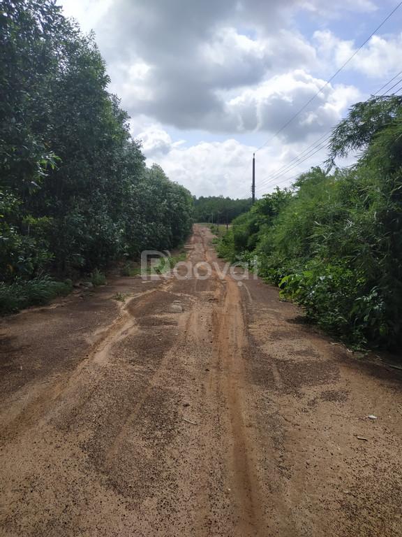 Bán gấp 500m2 đất xã Phước Bình, chỉ 1.5 tỷ giá bán liền trong tháng,