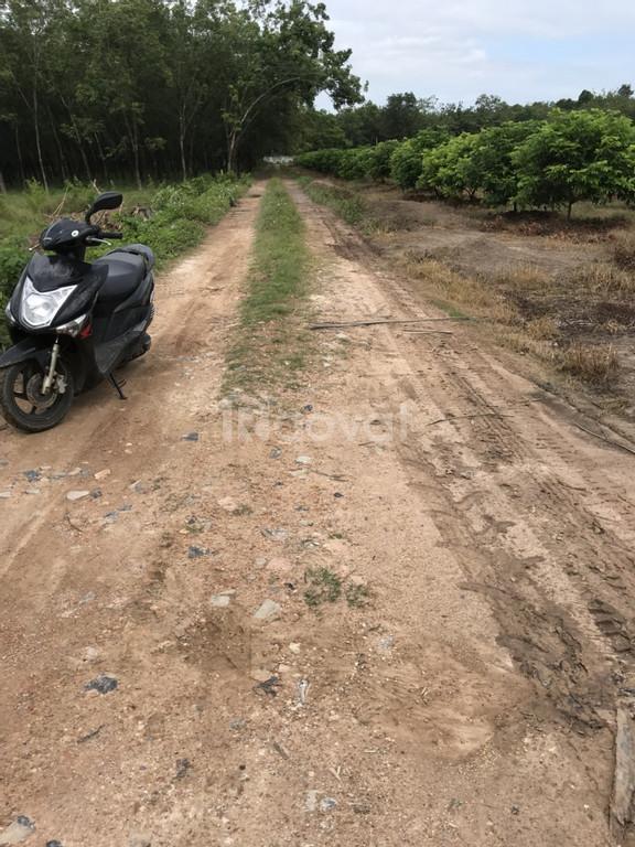 Cần bán 3 lô đất liền kề 5120m2, xã Chà Là, Dương Minh Châu, Tây Ninh.