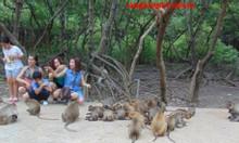 Tour Cần Giờ đảo khỉ 1 ngày hãy thử và trải qua cùng Cần Giờ Tourist