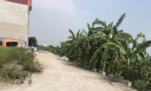 Bán gấp đất giãn dân Ngải Dương - Đình Dù - Văn lâm - Hưng Yên