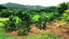 Bán nhà và vườn cây ăn quả diện tích 1,4ha (ảnh 4)