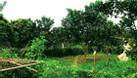 Bán nhà và vườn cây ăn quả diện tích 1,4ha (ảnh 1)