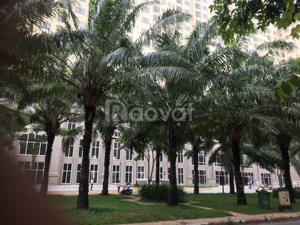 Cho thuê căn 2+1 Saigon Mia, có sân vườn, view nội khu đẹp