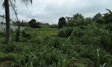 Bán 2.036m2 đất xã Phước Hiệp, Củ Chi