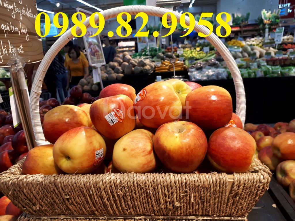 Bán giỏ giá rẻ, mua giỏ mây đựng hoa quả, giỏ đựng hoa quả bằng mây