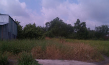 Cho thuê đất tại Trường Bình, Cần Giuộc, Long An, giá đầu tư