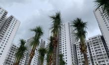 Giá căn hộ Saigon South Residences 2 phòng ngủ block C đầu tư tốt
