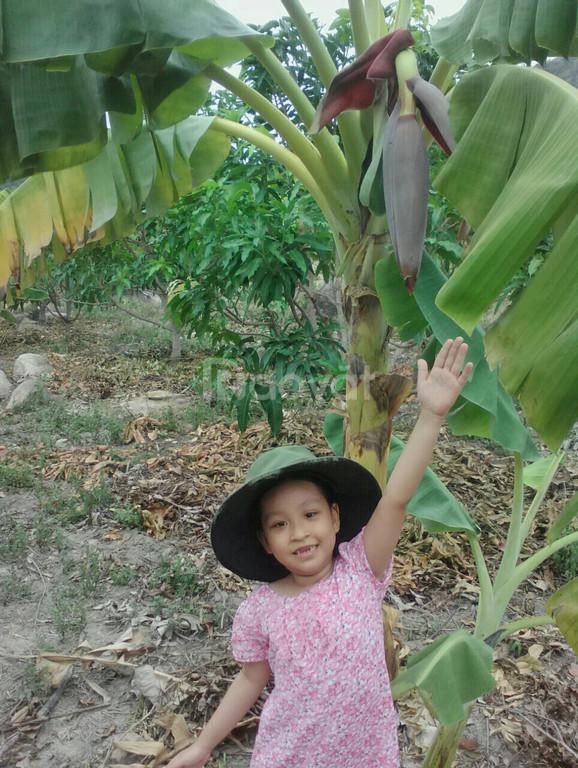 Nhanh tay để có thể sở hữu lô đất đường N1B Vĩnh Bình, Cam Lâm, giá rẻ