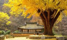 Săn ảnh sắc Thu Hàn Quốc với Tour Hàn Quốc 5N4Đ