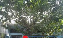 Bán nhanh nhà Bùi Đình Túy hẻm xe tải diện tích khủng