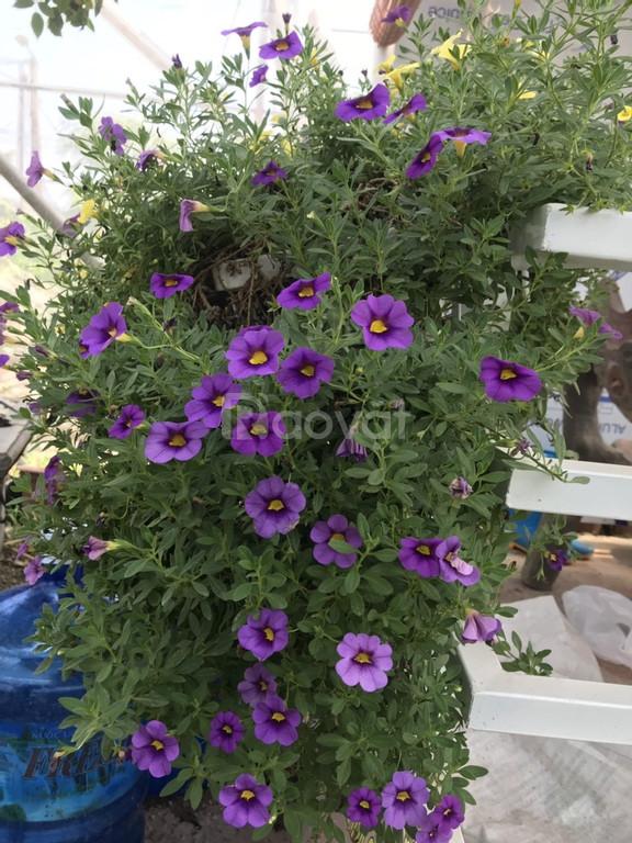 Cung cấp, trồng, chăm sóc cây cảnh, cây hoa trong nhà, sân vườn