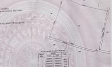 Ký gửi 1.000m2 đất trồng cây Quận 9, giá 9,5 tỷ, sang tên trong ngày.