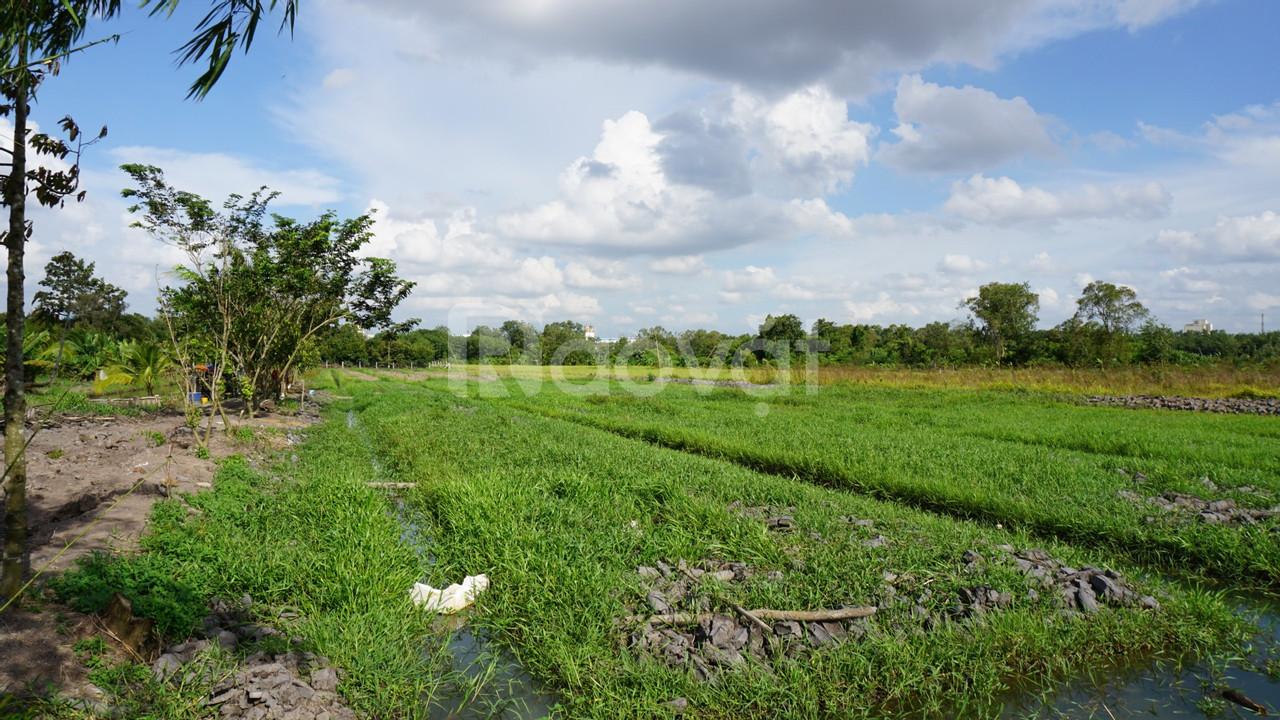 Đất Bến Cát, Bình Dương 30.000 m2 gần trung tâm, khu công nghiệp