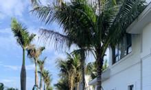 Sở hữu ngôi nhà thứ 2 - Căn hộ nghỉ dưỡng tại vùng biển Hồ Tràm