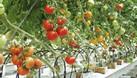 Nhà nhập khẩu, phân phối độc quyền hệ thống tưới nhỏ giọt Tây Ban Nha (ảnh 4)