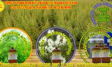 Tinh dầu Tràm Trà nguyên chất 1000ml