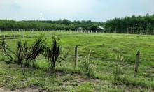 Bán đất giá trên trời xã Thái Mỹ huyện Củ Chi SHR