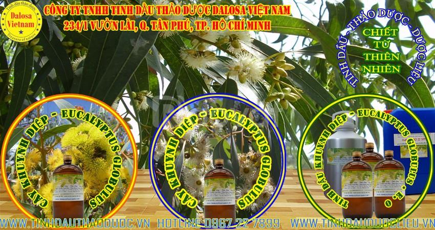 Tinh dầu Khuynh Diệp bảo vệ đường hô hấp 1000ml