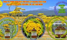 Tinh dầu Cúc Vạn Thọ nguyên chất  1000ml