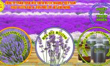 Tinh dầu Oải Hương Lavender nguyên chất 1000ml