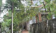 Cần bán nhà vườn ở Phật tích, Tiên Du, Bắc Ninh