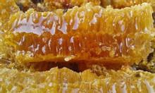 Mật ong ruồi nguyên tổ