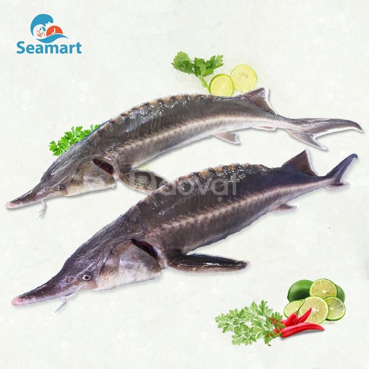 Bán cá tầm Đà Lạt sức sống khỏe tại TPHCM
