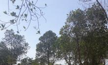 Bán đất rẫy tặng kèm nhà Bình Thuận
