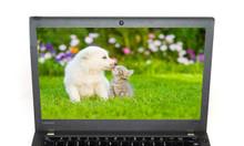 Laptop Lenovo ThinkPad X270 (20HM-000JVA) (Backlit keyboard)