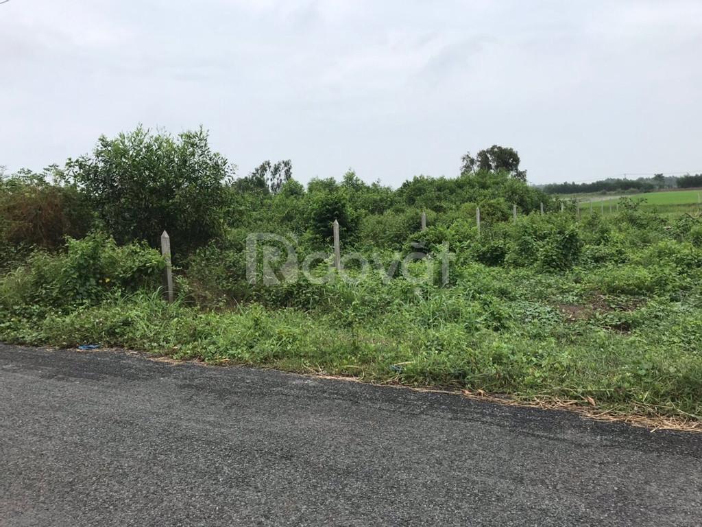 Bán đất giá rẻ mt Tam Tân xã Thái Mỹ huyện Củ Chi SHR thanh toán nhanh