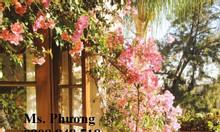 Bàn ghế sắt nghệ thuật đa dạng trang trí sân vườn