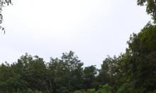 Bán gấp đất thổ cư chính chủ Gót Chàng, Củ Chi 15*42 3tỷ6, SHR
