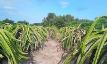 Vườn Tlong 550 trụ, gần Quốc Lộ 1A, Tân Lập, HTN