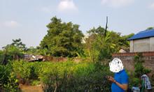 Chính chủ cần bán lô đất vị trí đẹp, giá rẻ tại Phú Hòa, Phú Yên.