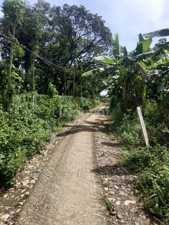 Chỉ 800 triệu/sào, bán gấp 7770m2 đất tại xã Bàu Cạn, L.Thành