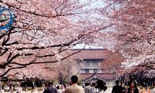 Chương trình du lịch: Khám phá cung đường vàng Nhật Bản