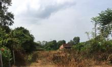 Bán 500m2 đất trồng cây